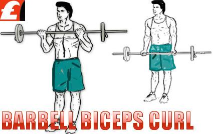 Barbell Biceps Curl Egzersizi En İyi Videolar