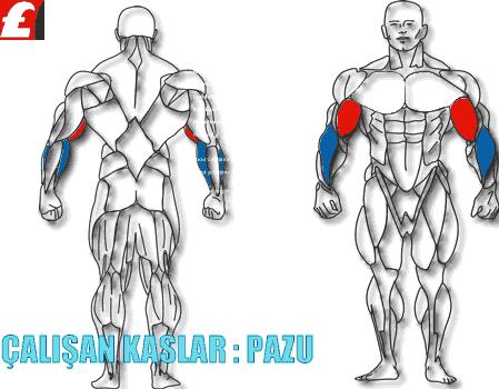 Çalışan Biceps Kasları