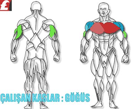 göğüs kasları (chest muscle)