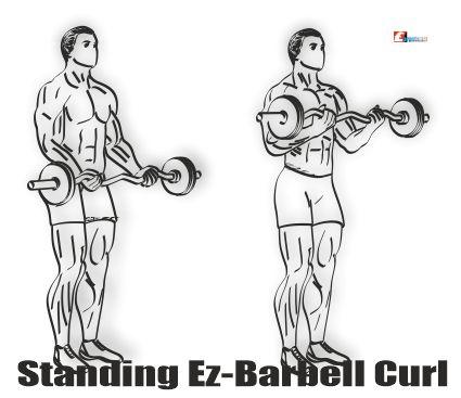 Ez-Barbell Curl Nasıl Yapılır?